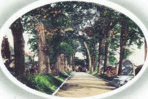 Avenue of trees, St. Mary's Churchyard ca. 1903 (Glen Johnson Collection)