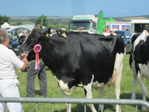 30/07/2014 Prize Winning cow at the Show (c) Glen K Johnson